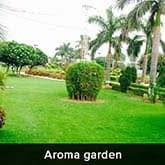Pionier Gardenia - Aroma Garden